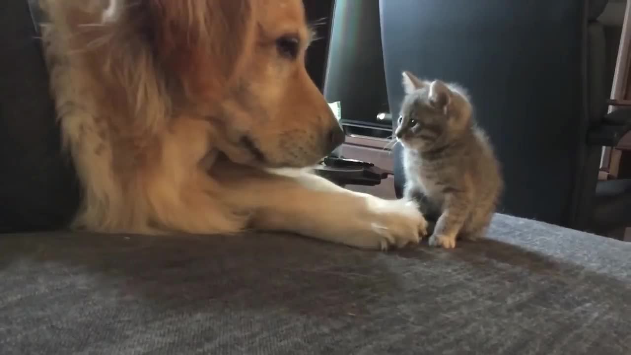 kitten meets doggo. .. <Meanwhile