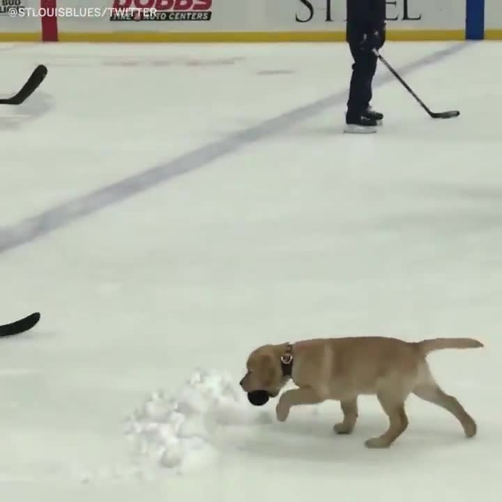 Hockey friend. join list: QtStuff (584 subs)Mention History.. I'm surprised the little guy didn't slip.