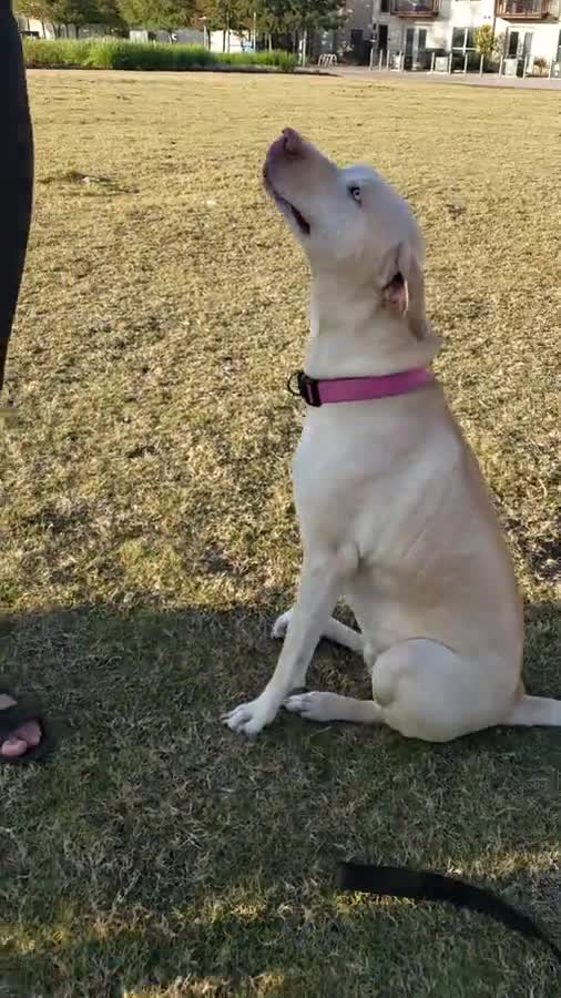 Park dogs. So people asked me to post the dogs at the park I work in. Here are just a few. join list: ParkDogs (46 subs)Mention History This is Aquilla, she has