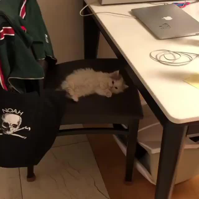 chair kitten. .. A smol floofy boi.