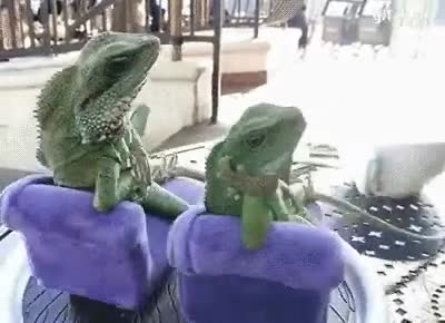 LOUNGE LIZZARDS. .