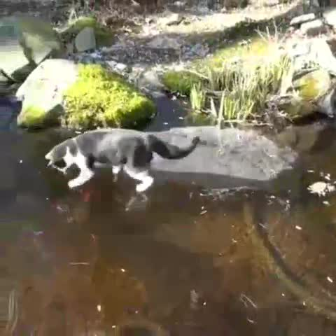 Meower bamboozled by ice. .