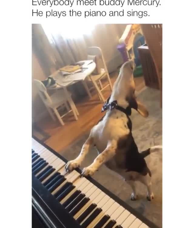 doggo plays piano and sings. .. Still better than rap.