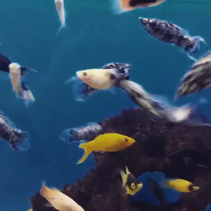 Monday's Cute Things - 31/7/2017. join list: CuteStuff (2142 subs)Mention Clicks: 128797Msgs Sent: 579556Mention History I only have a few cute fishy gifs. Plea