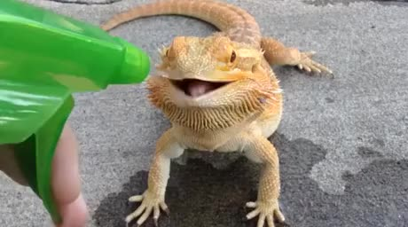 Make sure to water your dragons. Have you eaten enough today? Drank some water? Make sure that noggin is in good shape too.. That's a funny looking dog